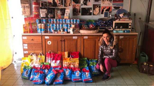 armeno raccolta canile gattile