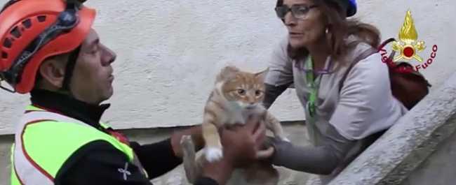 gatto genova