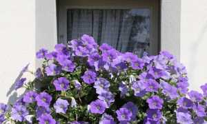 balcone fiori