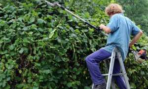 giardiniere foto